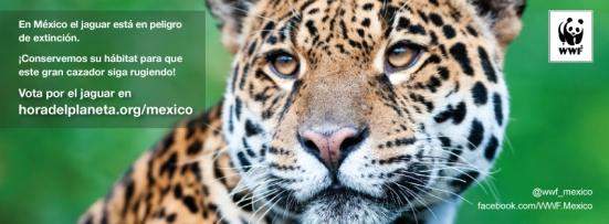 Cover_facebook_jaguar
