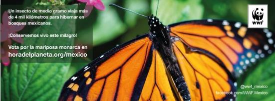 Cover_facebook_mariposa-monarca