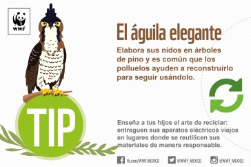 Final-Tips-WWF-01