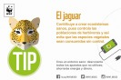 Final-Tips-WWF-10