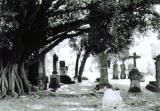 La leyenda del árbol del vampiro.Jalisco.