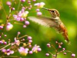 La leyenda del colibrí. Leyendamaya.