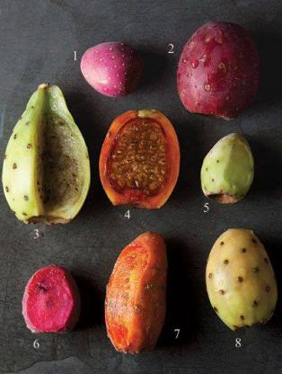 Variedades de Tunas: (1) juana, (2) roja pelona, (3) cristalina, (4) naranjona, (5) xoconostle, (6) cardona, (7) cuerno de venado, (8) platanera.