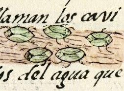 Axayácatl, Códice Florentino. Foto: mexicolore