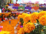 Flores de día de muertos: Cempasúchil y Mano deleón